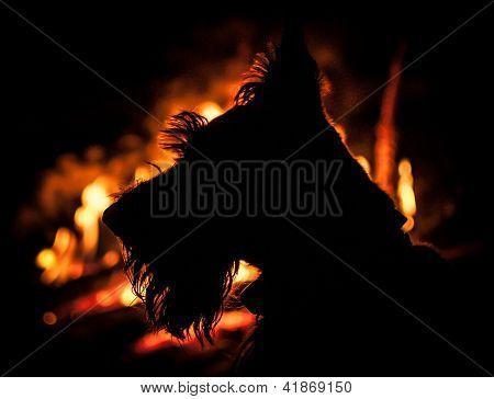 Fire Scotty