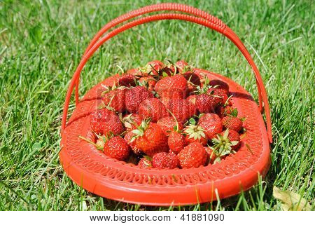 Lug-box Of Ripe Strawberry On Green Grass