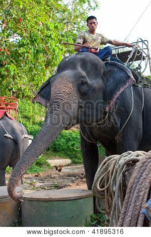 PHUKET, THAILAND, 2 FEB - A mahout in charge of his elephant waiting for his passengers at the Camp Chang Kalim Elephant Sanctuary, February 2, 2013 in Phuket, Thailand.