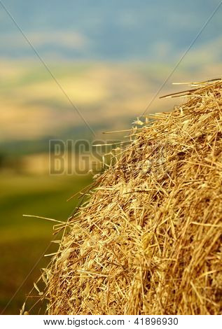 Mown wheat field, large round bales of hay, field of corn in the distance