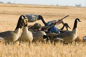 picture of hunt-shotgun  - Boy goose hunting in the autumn in North Dakota - JPG