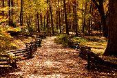 stock photo of split rail fence  - A trail through an autumn forest with split rail fence - JPG