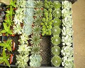 picture of xeriscape  - An assortment of succulent or cacti plants that grow in desert climates or that are used in xeriscaping - JPG