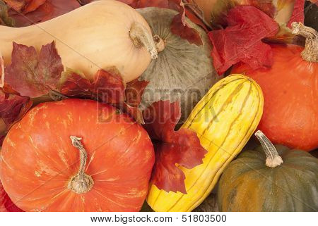 Butternut, Acorn And Other Fall Squash Very Colorful