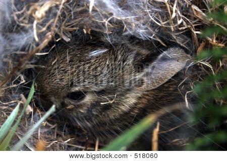 Baby Bunny 1