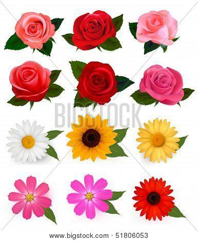Big Set Of Beautiful Colorful Flowers.