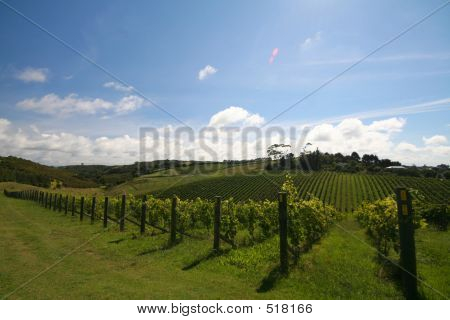 Vineyard Alignment