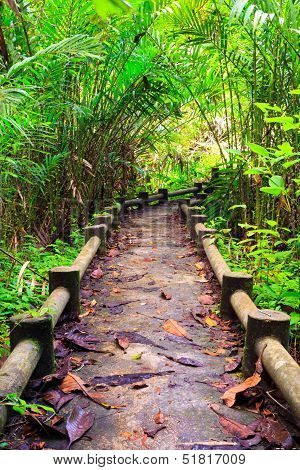 Path To The Jungle,trang,thailand