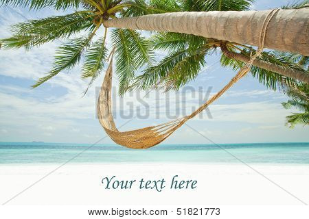 Palm Tree in Tropics with Hammock