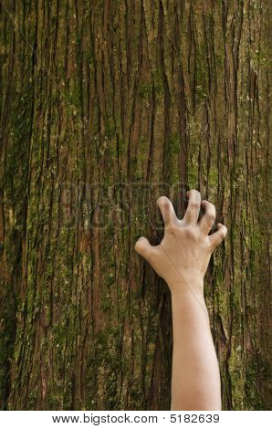 Hand Clawing Up A Cedar Tree Trunk