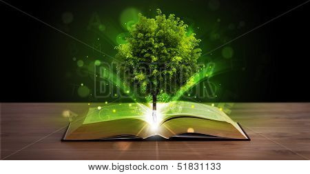 Open book with magical green tree and rays of light on wooden deck