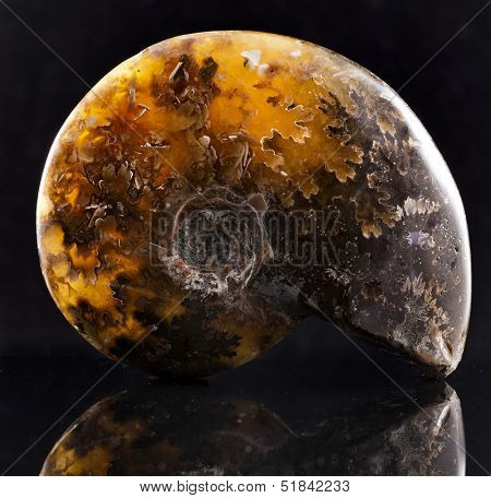 ammonite stone with reflection on black surface background