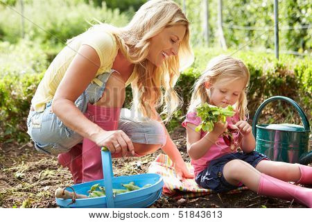 Mother And Daughter Harvesting Radish On Allotment