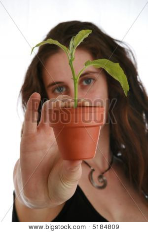 Woman's Hand With Plant