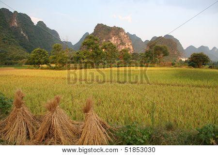 Rice Stacks