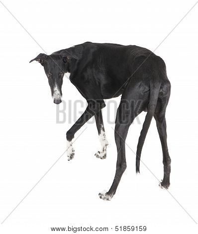 The Dog Turned Its Back