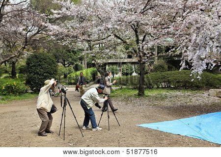 Japan - Hanami