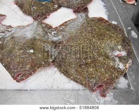 Turbots Fish