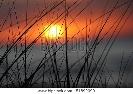 Dune Grass - Sunset