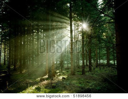 Mystic forest