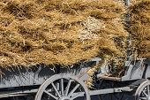 Traditional Dutch Wooden Haywagon Loaded With A Pile Of Hay