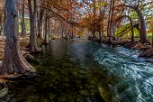 stock photo of guadalupe  - Cypress Trees with Beautiful Fall Color and Large Roots Lining the Crystal Clear Guadalupe River in the Texas Hill Country - JPG
