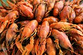 image of crawfish  - Image of background with many boiled crawfishes - JPG