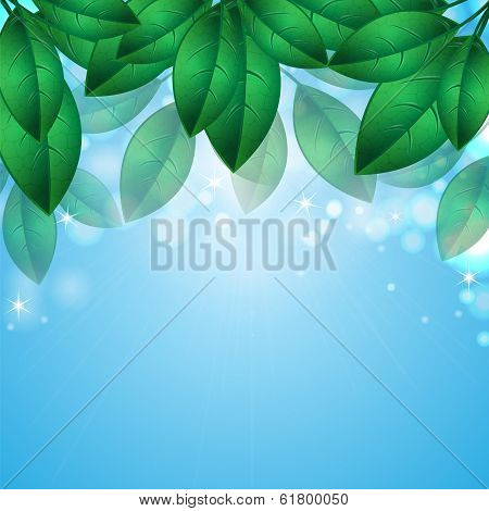 Green Spring Leaves On Background Blue Sky