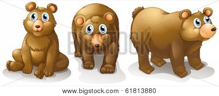 Illustration of the three brown bears on a white background