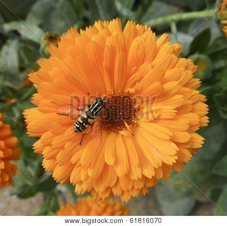 Bee Settled on Flower