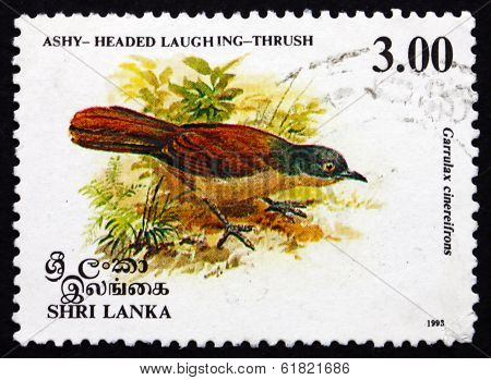 Postage Stamp Sri Lanka 1993 Ashy-headed Laughingthrush, Bird