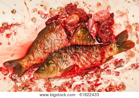 Dissected Fish