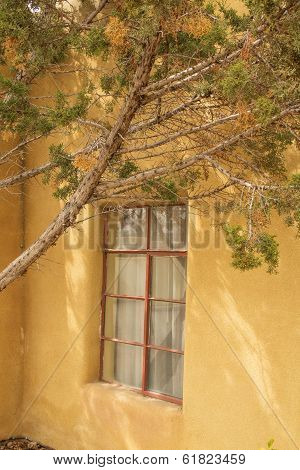 Branching tree in front of adobe wall