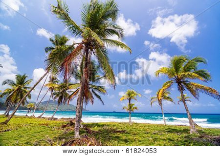 Lush Green Palm Trees