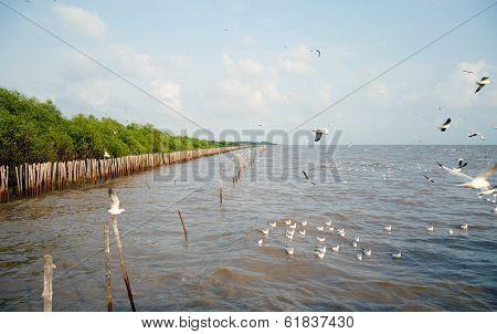 Beautiful Gull Flying, Brown-headed Gull, Bangpu, Thailand