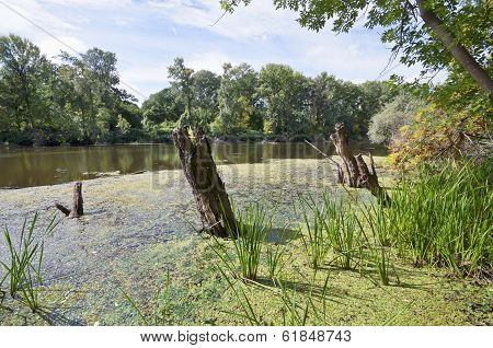 Sunny Swamp With Tree Trunks