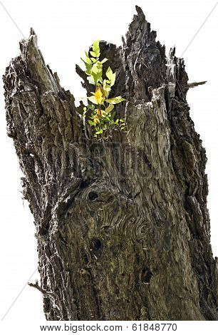 Tree Trunk With Sprout