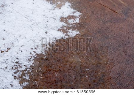 Cut Tree Surface With Melting Snow
