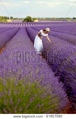 Beautiful Young Lady Picking Some Lavender In Lavender