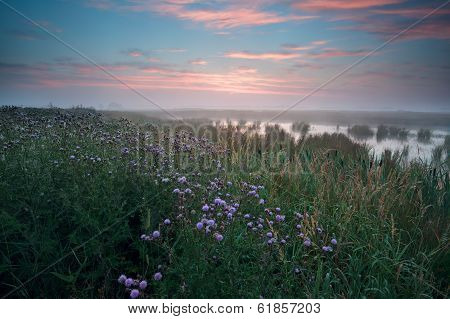 Warm Misty Sunrise Over Swamp