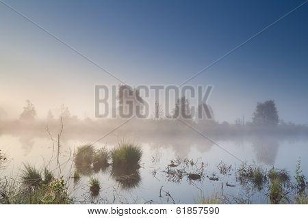Misty Calm Sunrise Over Swamp