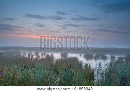Summer Misty Sunrise Over Swamp