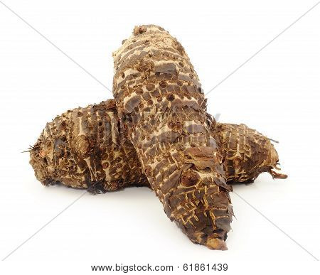 fresh taro root (colocasia) on a white background