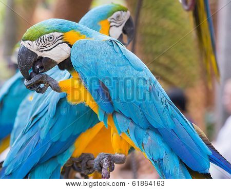Parrots in landscape tropical park of Nong Nuch in Pattaya, Thailand