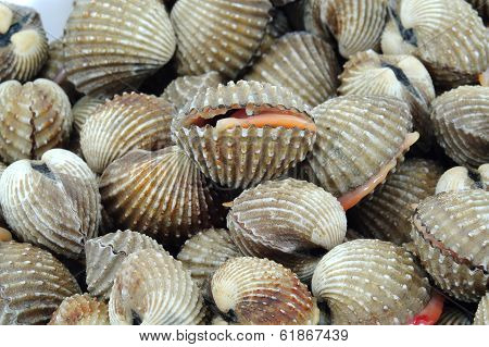 Cockles On The  Market