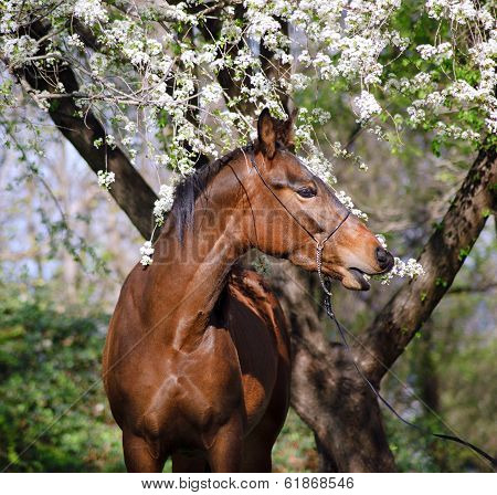 Portrait of a horse under the tree