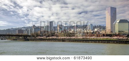 Cherry Blossoms With Portland City Skyline