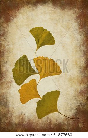 Ginko leaves with dark grunge