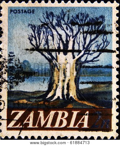 ZAMBIA - CIRCA 1967: A stamp printed in Zambia shows Baobab circa 1967