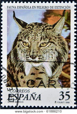 SPAIN - CIRCA 1998: A stamp printed in Spain shows a Iberian lynx circa 1998